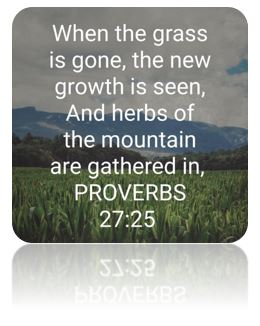 Proverbs 27 vs25 formatted